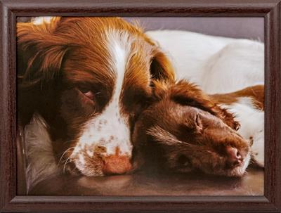 Sleeping Spaniel and Pup Lap Tray